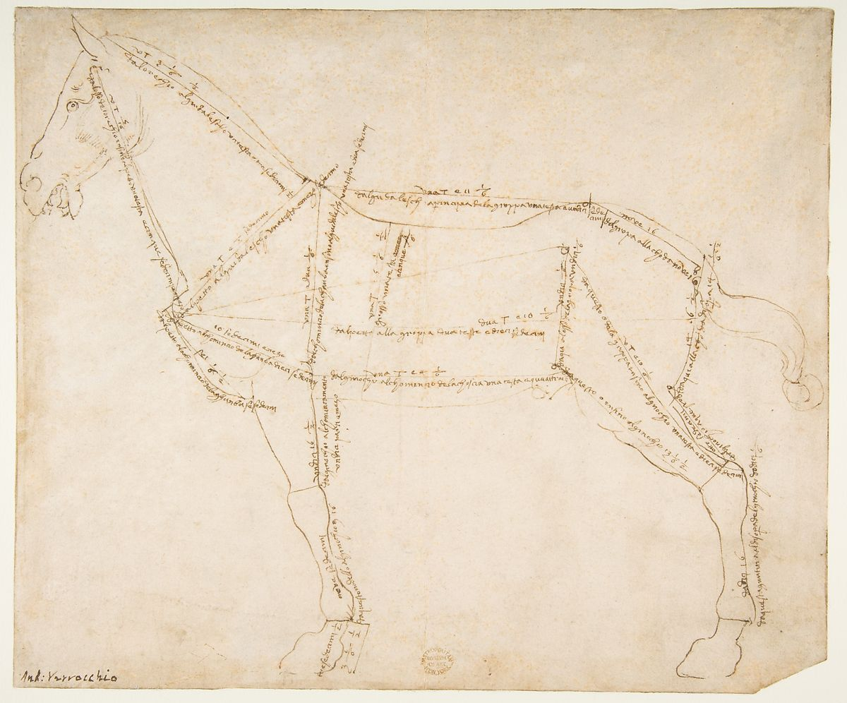Verrocchio, «Rilievo metrico di un cavallo di profilo da sinistra»