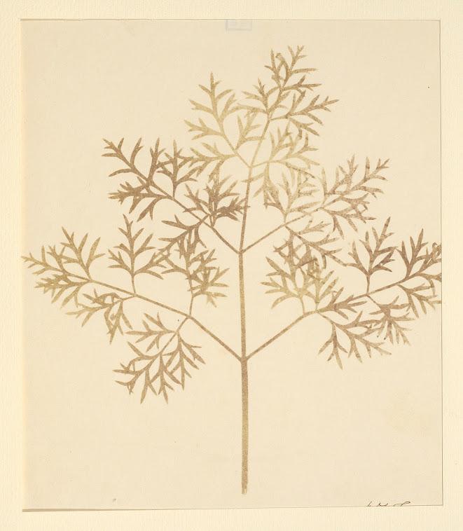"William Henry Fox Talbot, ""Leaf of a plant"" (1839–1844), disegno fotogenico"