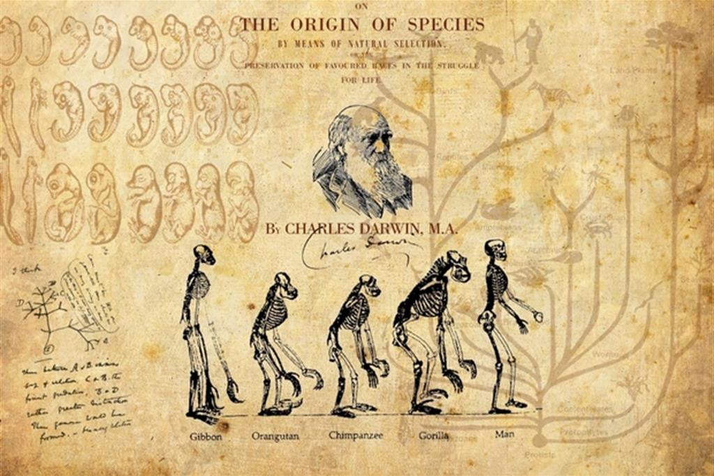 Erdogan «purga» anche l'evoluzionismo di Darwin