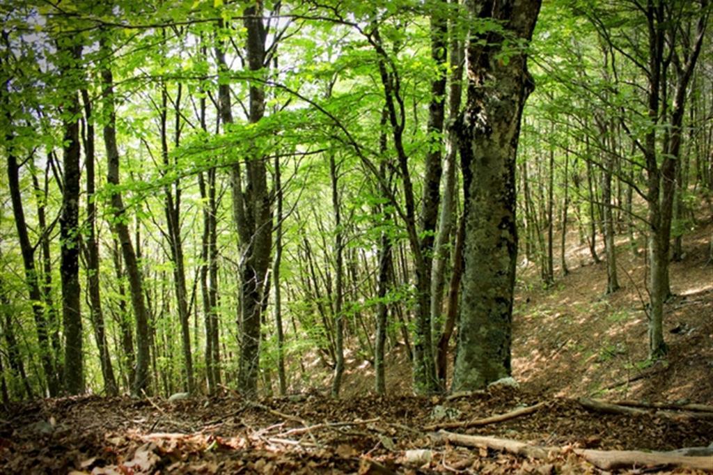 Foreste d'Italia, il patrimonio che chiede una (buona) cura