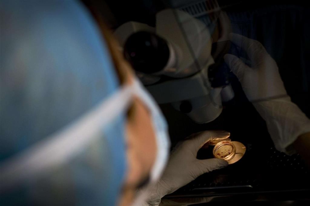 Creato embrione pecora-uomo per trapianto organi