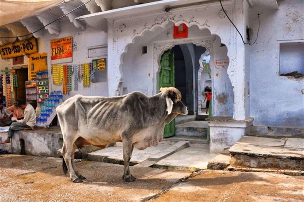 «Contrabbandava vacche»: musulmano linciato dalla folla