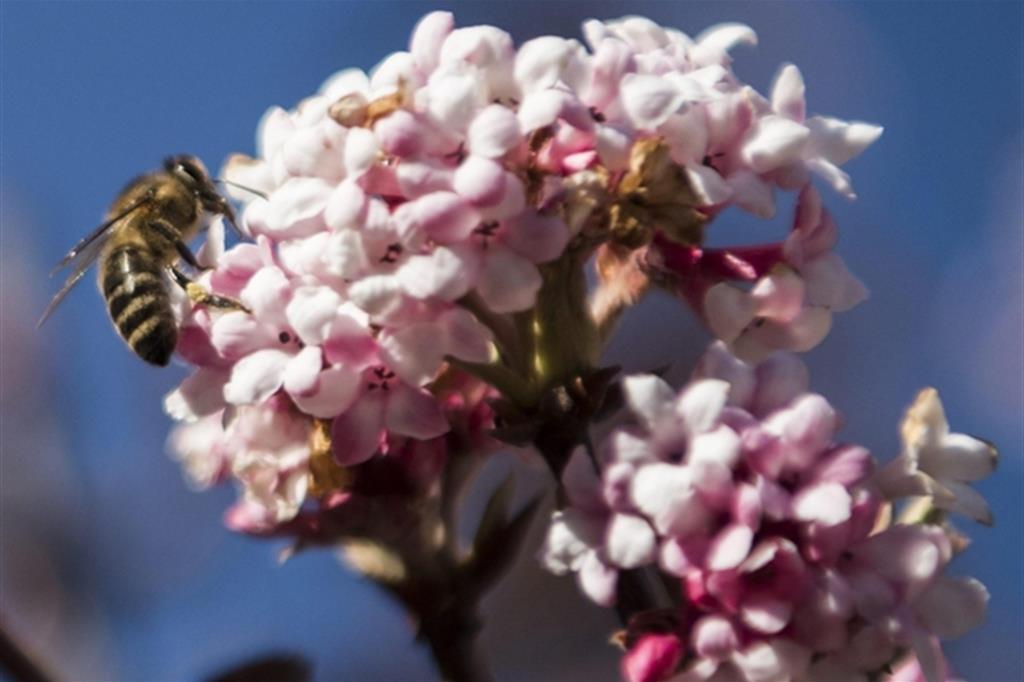 In 20 città le api sentinelle dell'inquinamento