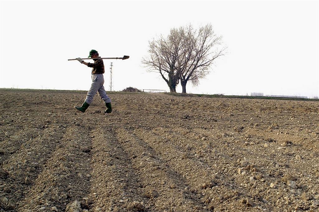 La siccità nella campagna mantovana (foto archivio Ansa)
