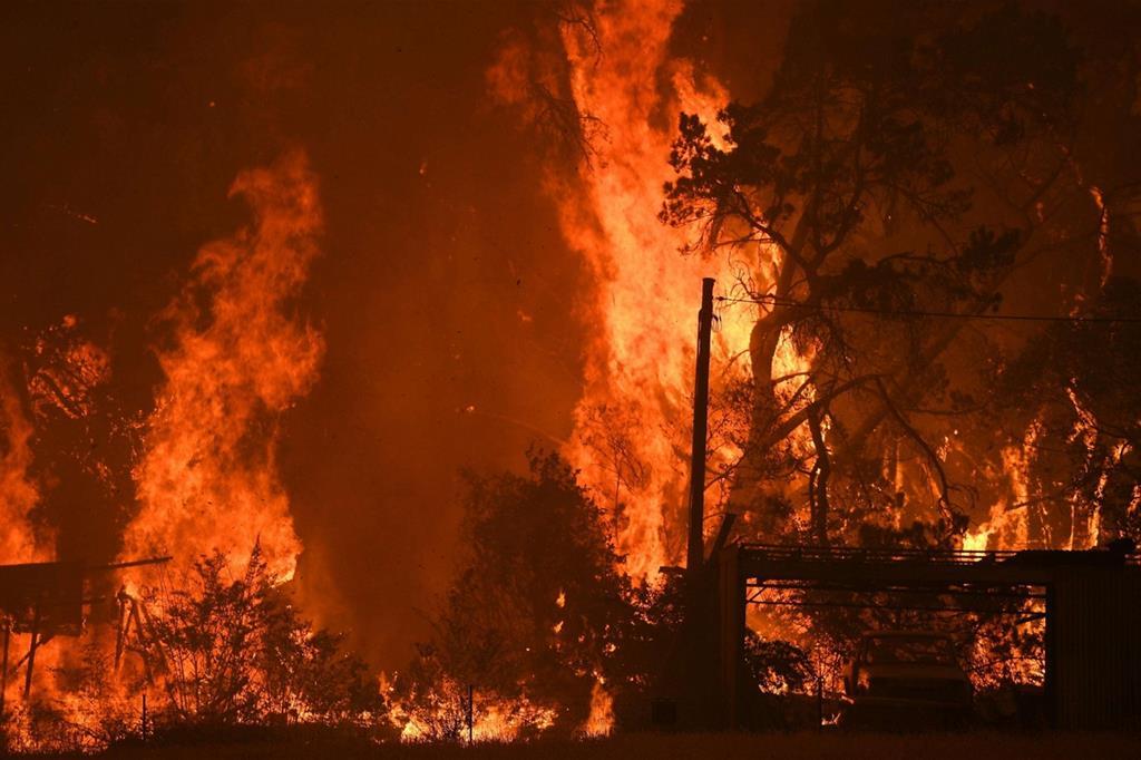 Gli incendi stanno devastando l'Australia