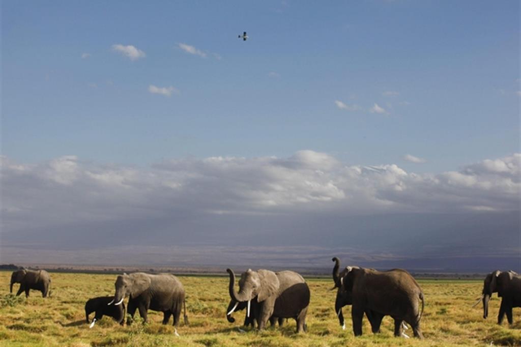 Un gruppo di elefanti nel parco nazionale di Amboseli, in Kenya / Epa/Dai Kurokawa