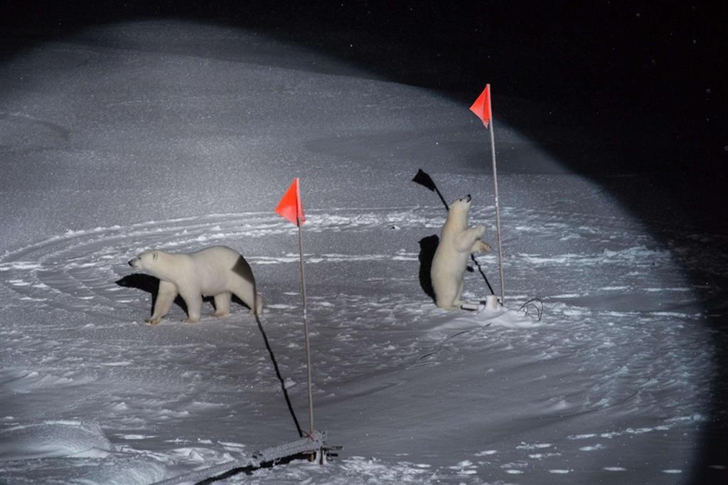 Esther Horvath ha ritratto due orsi polari che si avvicinano a un'apparecchiatura scientifica che investiga sui cambiamenti climatici, nell'Oceano Artico centrale. La foto ha vinto la sezione Ambiente del World Press Photo - Ansa