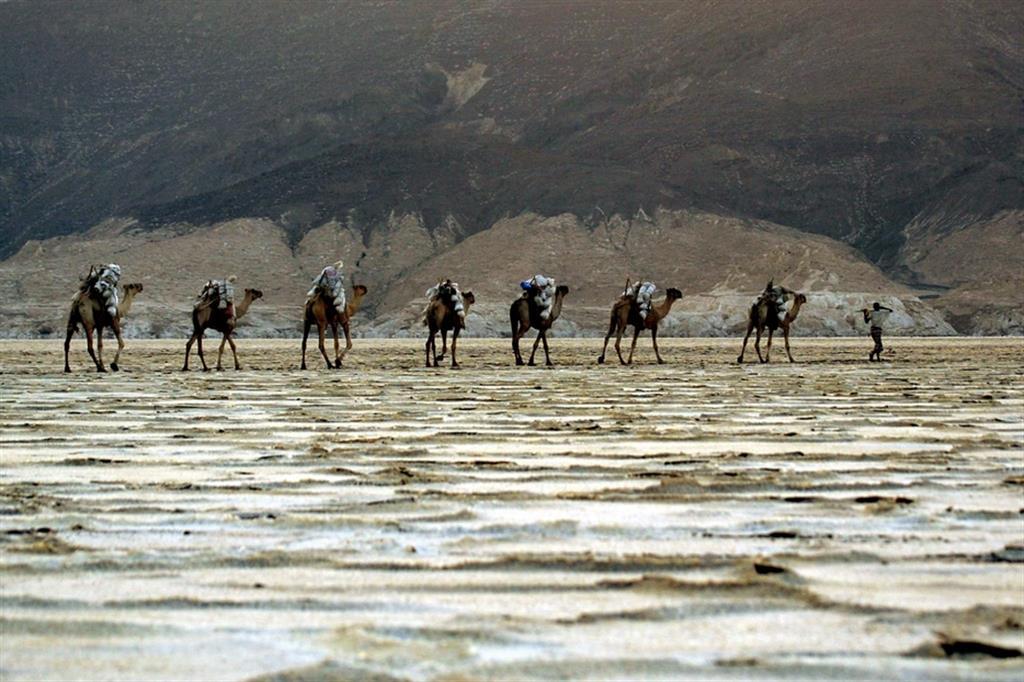 Afar con i cammelli nella depressione della Dancalia