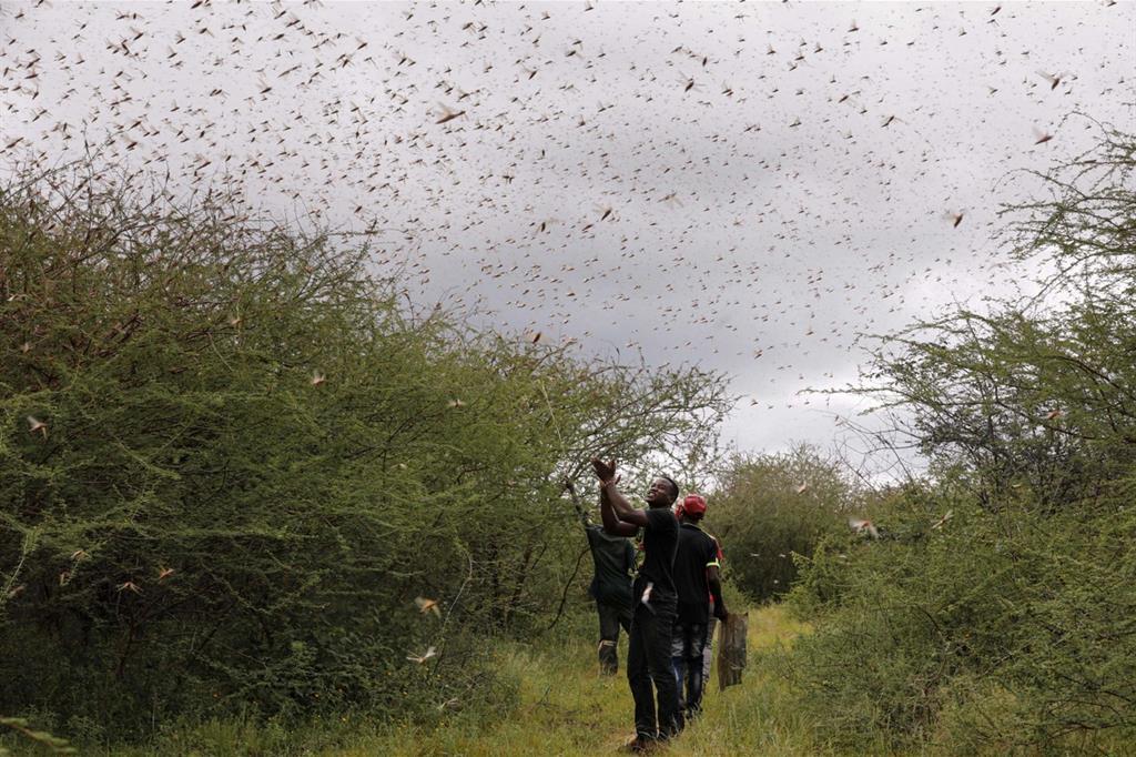 L'agricoltore Theophilus Mwendwa batte le mani e fa rumore nel tentativo di scacciare le locuste a Enziu, Kitui County - Ansa/Fao