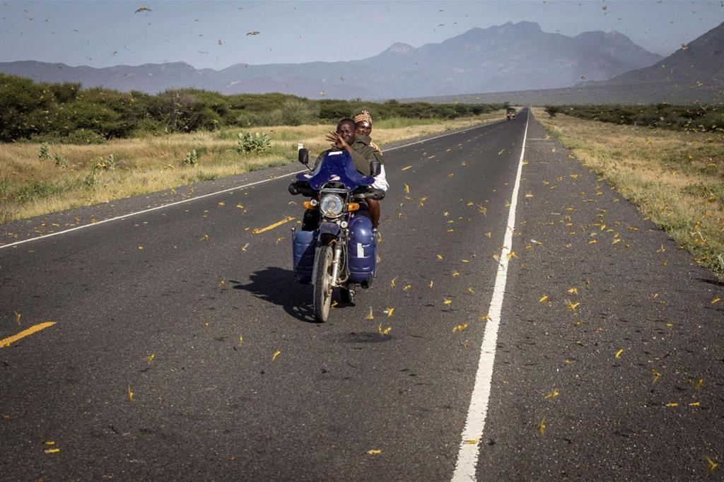 Le locuste invadono anche la strada principale, a Ololokwe, Samburu County, creando fastidi a chi guida - Ansa/Fao