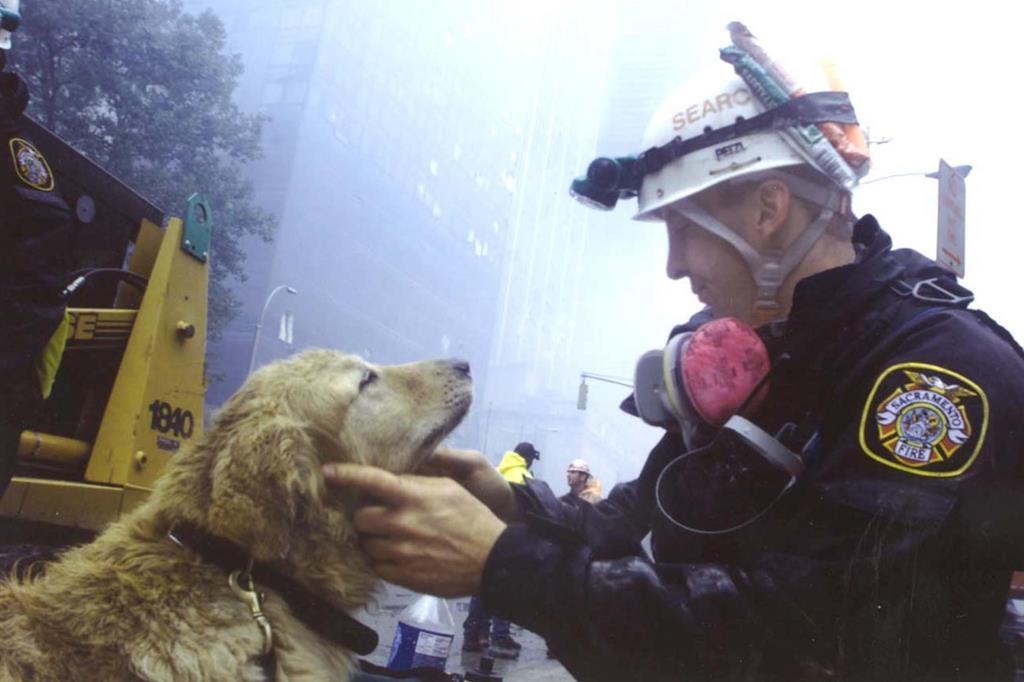 Fu un cane a trovare l'ultima persona estratta viva dalle macerie del World Trade Center, 27 ore dopo gli attentati. Era uno dei 300 addestrati a cercare l'odore umano, che parteciparono al recupero di persone. Perché potessero svolgere al meglio il loro lavoro, furono affiancati da diversi veterinari. I cani vennero utilizzati anche come animali da terapia per i vigili del fuoco che lavorarono ininterrottamente per le ore successive al crollo delle torri. - Ansa