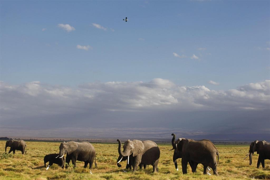 Lo Zimbabwe apre la caccia agli elefanti. «Per le casse dello Stato»